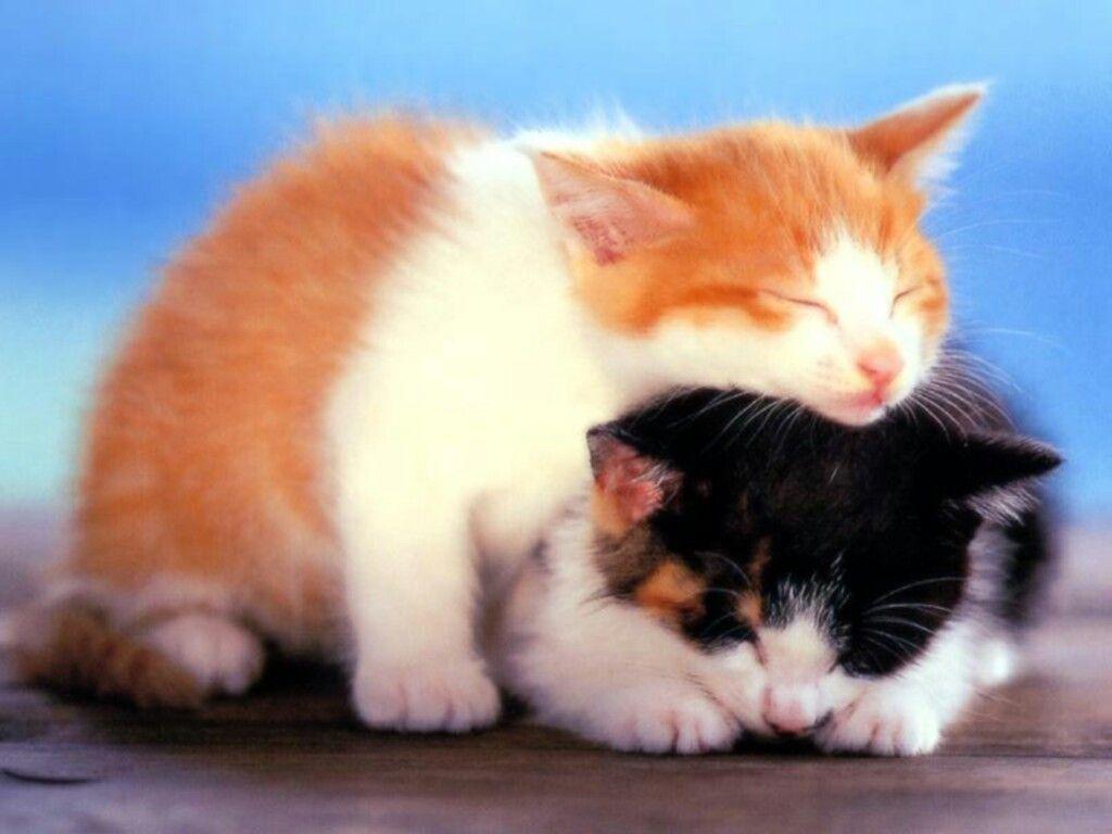 les chats!! - Page 2 K1jgigff